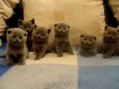If you have a soft spot in your heart for a kitten, you have to check out these cuties!!!