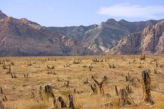 Desert Landscape   Photo by Tela Chhe