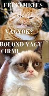"Képtalálat a következőre: ""grumpy cat magyarul felirattal"" Grumpy Cat Humor, Cat Memes, Grumpy Cats, Funny Cats, Funny Jokes, Animals And Pets, Naha, Dog Cat, Funny Pictures"