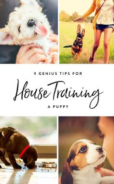 9 Genius Tips for House-Training a Puppy  @KaufmannsPuppy