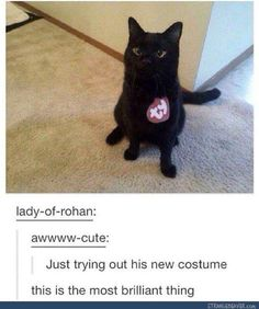 You have a need to lots of humor if you want to get through your day without losing your sanity.These black Cat Memes are helpful for that.Read This Top 24 Black Cat Memes Cute Funny Animals, Cute Baby Animals, Funny Cute, Cute Cats, Hilarious, Crazy Cat Lady, Crazy Cats, Pinterest Foto, Cats Diy