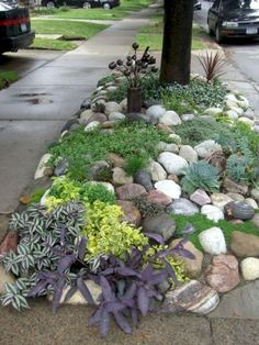 32 Stunning Low-Water Landscaping Ideas for Your Garden Art Ecco friendly. Low water needs, low care Low Water Landscaping, Mailbox Landscaping, Small Front Yard Landscaping, Landscaping With Rocks, Backyard Landscaping, Landscaping Ideas, Landscaping Software, Backyard Ideas, Landscaping Melbourne
