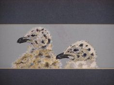 sea gull pullus water colour on paper july 2013 #paola consani