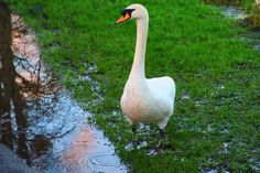 Swanning Around January 2016 https://www.pinterest.com/annbri
