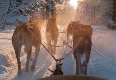 Last Minute-Special: Polarglitzern im finnischen Winterwunderland Horses, Animals, Places To Travel, Vacation, Travel, Animais, Animales, Animaux, Animal