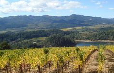 Viader - Napa Valley winery. Beautiful view and incredible reds!