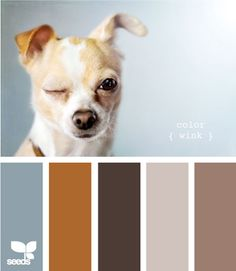 Design Seed's Doggy Inspired Color Palettes. Brilliant! Miles has some gorgeous tones I should be drawing inspiration from. ;) created by @Jess Liu colaluca