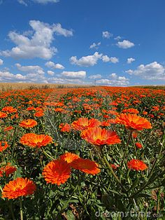 Field of flowers by Walther.k, via Dreamstime