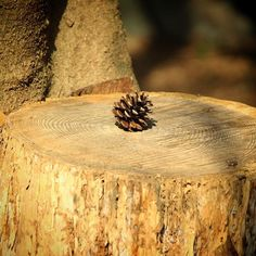 【chun_hapi】さんのInstagramをピンしています。 《切り株にまつぼっくりひとつ。 物語が始まりそう😊✨✨ #まつぼっくり#切株#森#京都#わくわく#リス出てこい#いないけど#kissx7 #物語#story#nature#tale#wild#instagram#pic#photo#longlongtimeago #ファインダー越しの私の世界 #妄想#dreamer#canon#カメラ好きな人と繋がりたい#写真好きな人と繋がりたい#followme》