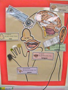 une affiche des cinq sens (pour l'enseignant(e)), étiquettes à imprimer