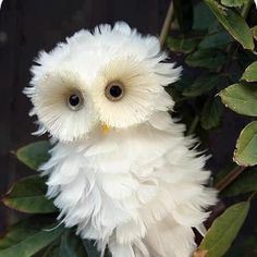 """A Young Owlet: """"Fluffy Feathers!""""   #adorable"""