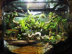 Gecko Terrarium, Aquarium Terrarium, Reptile Terrarium, Terrarium Plants, Reptile House, Reptile Habitat, Reptile Room, Reptiles, Amphibians