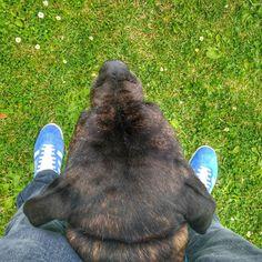 A Dol de Bretagne avec mon copain. Bagad partout. #gazelle #dinantourisme #breizhinside #bretagne #igersbretagne #igbretagne #bzh #breizh #adidas #SaintCoulomb #France #grass #mammal #park #nature #outdoors #animal #portrait #wildlife #outside #family #zoo #summer #young #cute #wild #daylight #garden #lawn