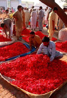 "26 août 2016 - dastaanewatan: ""Flower market,  by Nadeem Khawar. on Flickr. Roses for sale at a flower market in Lahore, Pakistan """