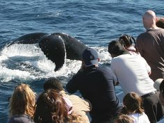 Whale watching on the Gold Coast, Australia.