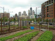 Urban Farming Comes with Unique Soil Contamination Risks
