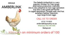 30 000 x Amberlink point of Lay Hens available (POL-18weeks) First come first serve. Orders of 100 and above @ R90 each.(collection only) Nelspruit contact us: Office: (013) 110 0923; Whatsapp: 082048 4486 Email: orders@cbpoultry.co.za First Come First Served, Brown Eggs, Hen House, Free Range, Hens, Poultry, Collection, Chicken Pen, Backyard Chickens