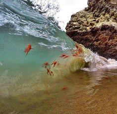 Swim like a shrimp.