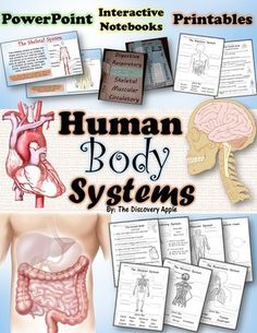 Human Body Systems Pack - Printables, Interactive Notebook, Editable PowerPoint from The Discovery Apple on TeachersNotebook.com Human Body Science, Human Body Activities, Human Body Unit, Human Body Systems, Health Activities, The Human Body, Interactive Anatomy, Human Body Organs, Muscular System