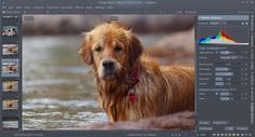 digiKam is an advanced open-source digital photo management application that runs on Linux, Windows, and MacOS. The application provides a comprehensive set of tools for importing, managing, editing, and sharing photos and raw files.You can use digiKam's import capabilities to easily...