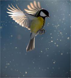Bird still