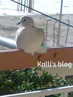 Bird, Projects, Animals, Log Projects, Animales, Animaux, Birds, Animal, Birdwatching