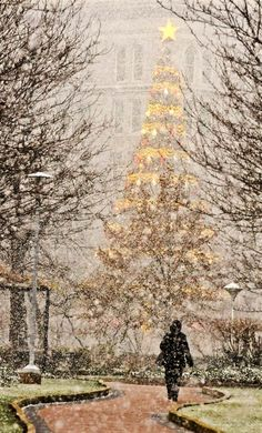 Snow blows through Gateway Center in Pittsburgh, Pennsylvania, USA, with a faint view of the Highmark Unity Christmas Tree