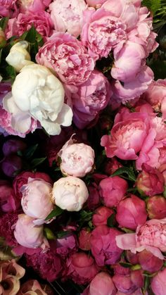 Peonies photographed by Shanann