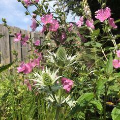 Dream Garden, Home And Garden, Trellis, Trees To Plant, Garden Plants, Gardening Tips, Landscape, Flowers, Planting Flowers