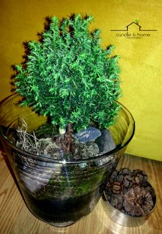 By Candle and Home  http://instagram.com/candleandhome  #urbangarden #urbangardening #plant #plants #terrarium #teraryum #handmade #diy #home #homedecoration #deco #art #design #decoration #indoorgardening #turkey #türkiye #earth #moss #microecosystem #ecosystem #interior #love #candleandhome
