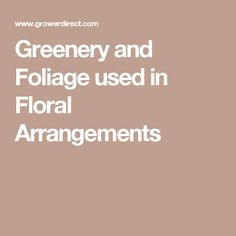 Greenery and Foliage used in Floral Arrangements
