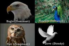 Free Bird Personality Test and DISC Personality Test. Reveal Your Innate Personality.