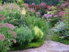 amsonia companion plants - Google Search Garden Great Ideas, Garden Inspiration, Sun Plants, Garden Plants, Garden Landscape Design, Garden Landscaping, Pink Perennials, Dutch Gardens, Fountain Grass