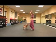 Bellydancing Pitbull (Dog/perro)