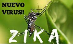 Sanofi Pasteur busca la vacuna contra el virus de Zika