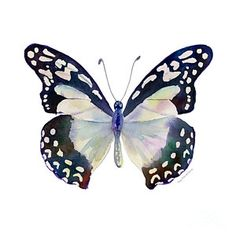 Painting - 90 Angola White Lady Butterfly by Amy Kirkpatrick