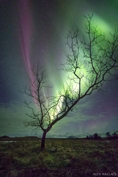 Árbol y Aurora Boreal en Islandia