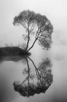 kahler Baum gespiegelt