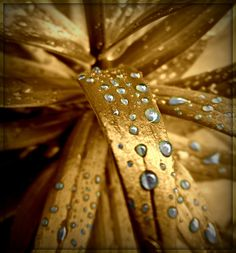 the golden presence of the Divine in life is so deeply beautiful... those with eyes of love live it & see it blossoming everywhere in their inner & outer world as earth becomes Heaven once again... With Love, Carolyn & Andy ♥♥