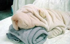 just hope its as soft as towels =)