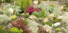 drought tolerant plant landscape | Planting drought tolerant plants in your garden saves on irrigation ...