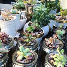 I've been busy getting ready for a few special events and the holidays! I've got great holiday succulent gift line launching soon. Stay tuned!  #succulents #succulent #homedecor #houseplant #succulentlife #succulentlove #succulove #plant #indoorgarden #succulentsofinstagram #plants #gardening #decor #shoplocal #614 #cbus