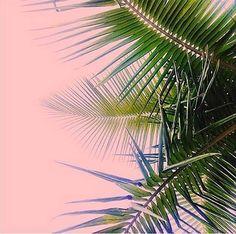 palms & pink