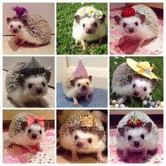 Me gusta los hedgehogs!