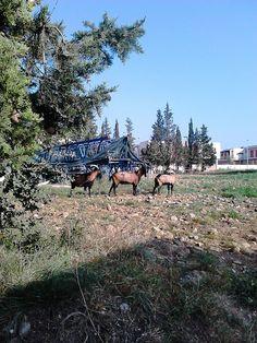 Cabra montés en libertad.
