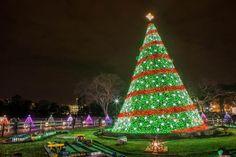 Best 10 Ways to Celebrate the Holidays in Washington DC: Visit the National Christmas Tree in Washington DC