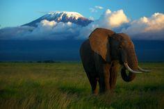 Our #Kilimanjaro #picoftheday! #Travel #TTOT #Climbing #Trekking #Adventure #Mountain #Tanzania