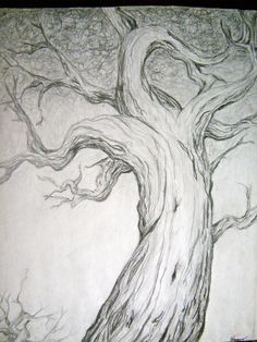 Tree Drawing - Pencil Study on Etsy, $100.00
