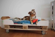 Zwei Dinge fehlten ja noch in unserer neuen Wohnung. Das Erste: Ein richtiges Bett für Koa. Vor allem jetzt im Winter, denn die Wohnung hat Fußbodenheizung. Wunderbar gemütlich für mich, für Koa eher weniger. Die mag es nämlich, auf dem kühlen Fußboden zu liegen… Eine Lösung musste her, bevor ich die Heizung anstelle. Ich habe mich für ein Hundebett aus …