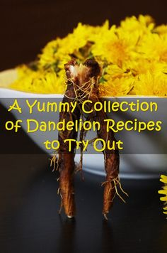 A Yummy Collection of Dandelion Recipes to Try Out - There are a lot of benefits for incorporating dandelions into your diet. The health benefits of dandelion include relief from liver disorders, diabetes, urinary disorders, acne, jaundice, cancer and anemia. It also helps in maintaining bone health, skin care and is a benefit to weight loss programs.